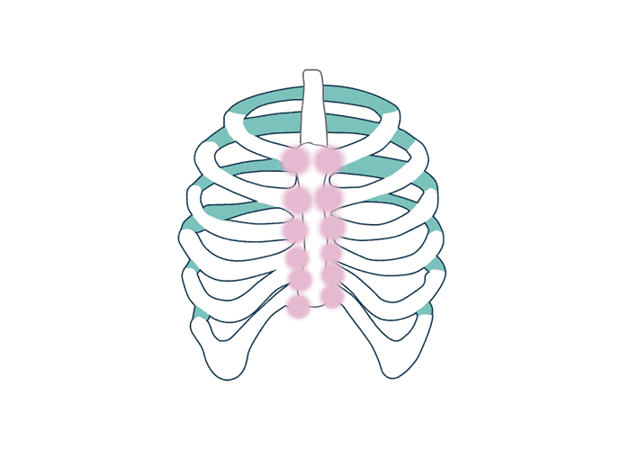 illustrations of a rib cage with a costochondritis